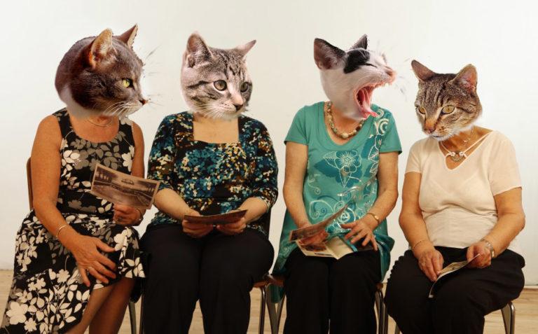 kattenclub