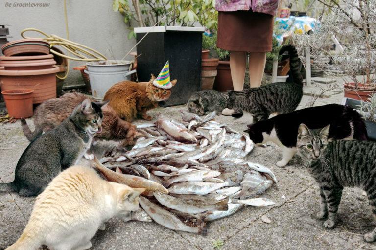 Kattenfeest